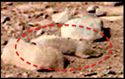 Close up of NASA/JPL photo of what appears to be a squirrel/rat on Mars. Credits:  UFO Sightings Daily